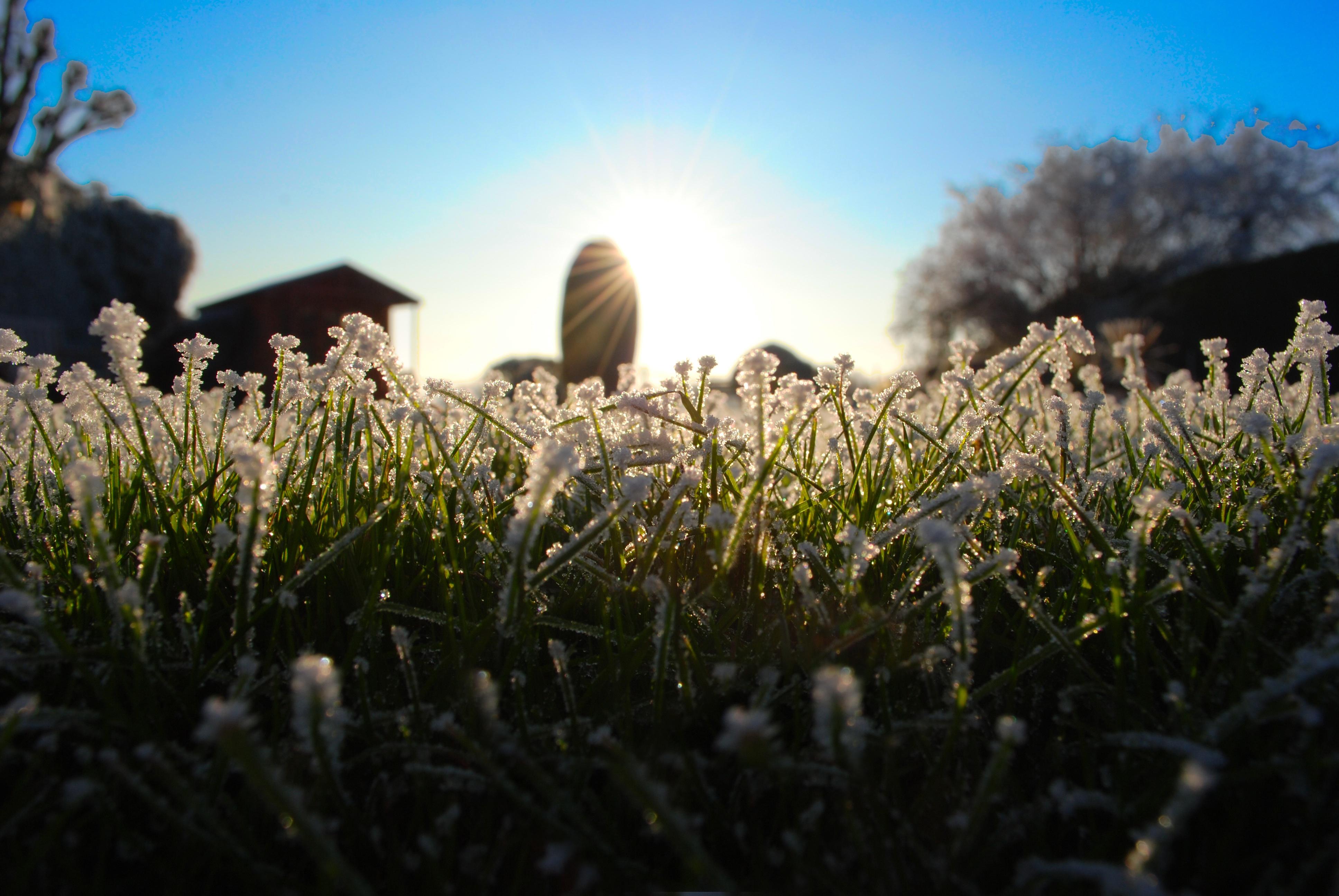 Rimfrost græsplæne